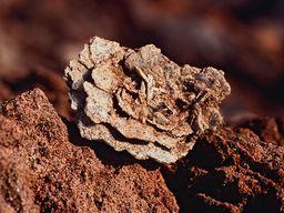 Eine Barytrose aus dem Bergwerk Vani (c) Tobias Schorr