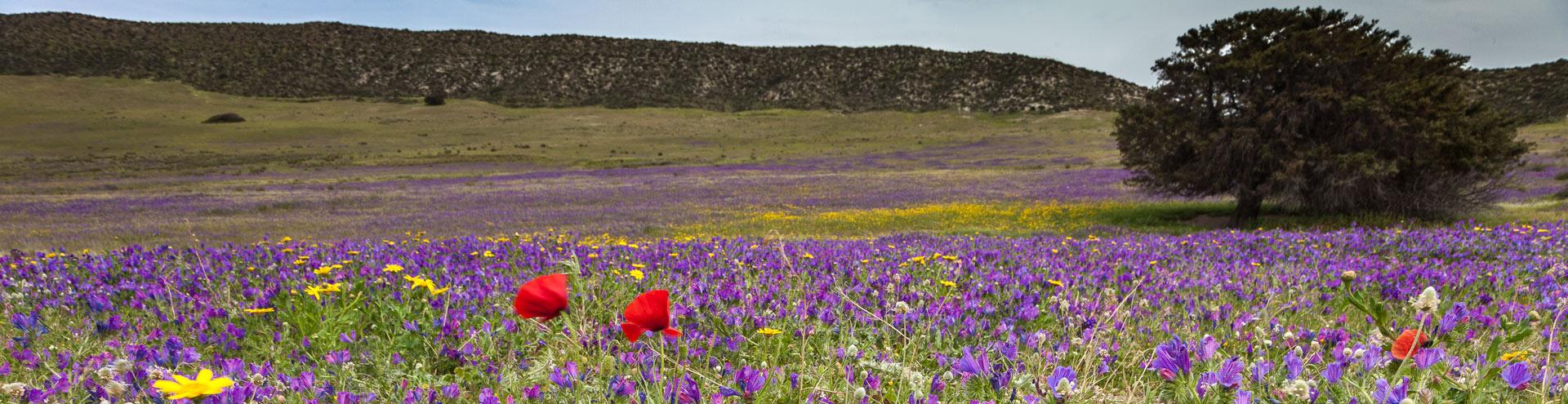 Frühling im Tsingrado-Krater